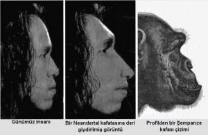 insan-sempanze